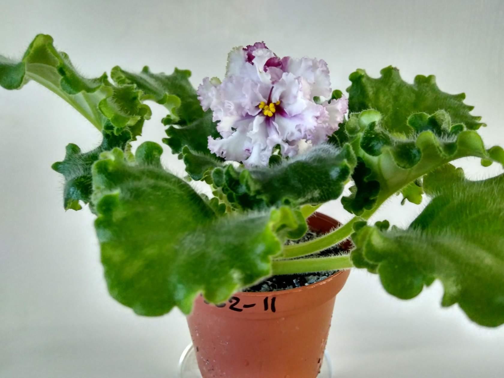 Самые первые цветы фото
