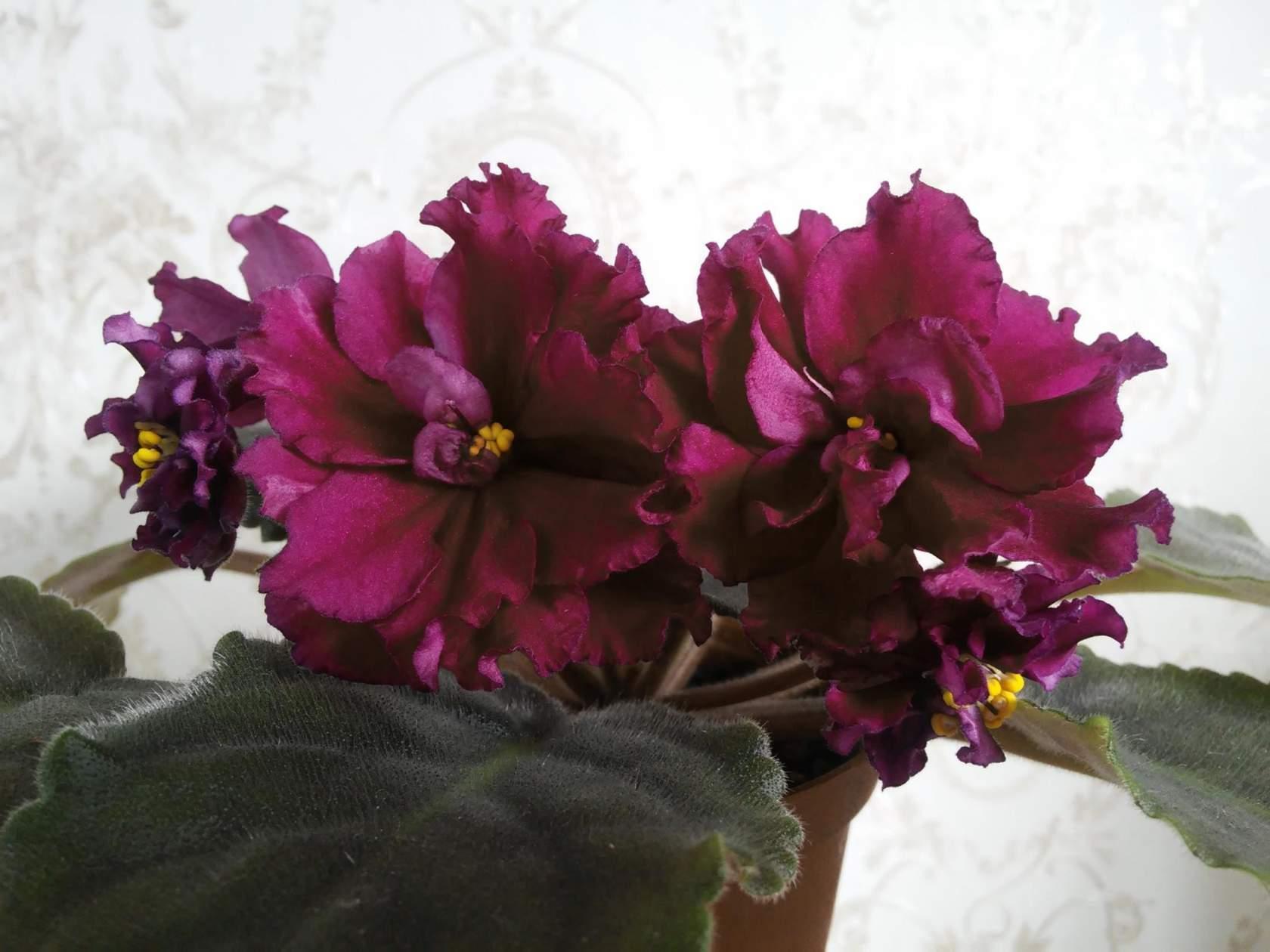 свадебные причёски на средние волосы с цветами фото